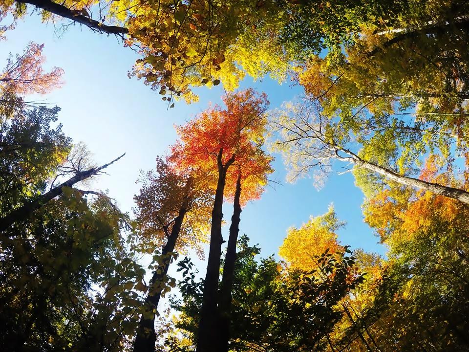 アルゴンキンパークで紅葉を見よう!6つのおすすめポイントを回る絶景日帰り旅行!!