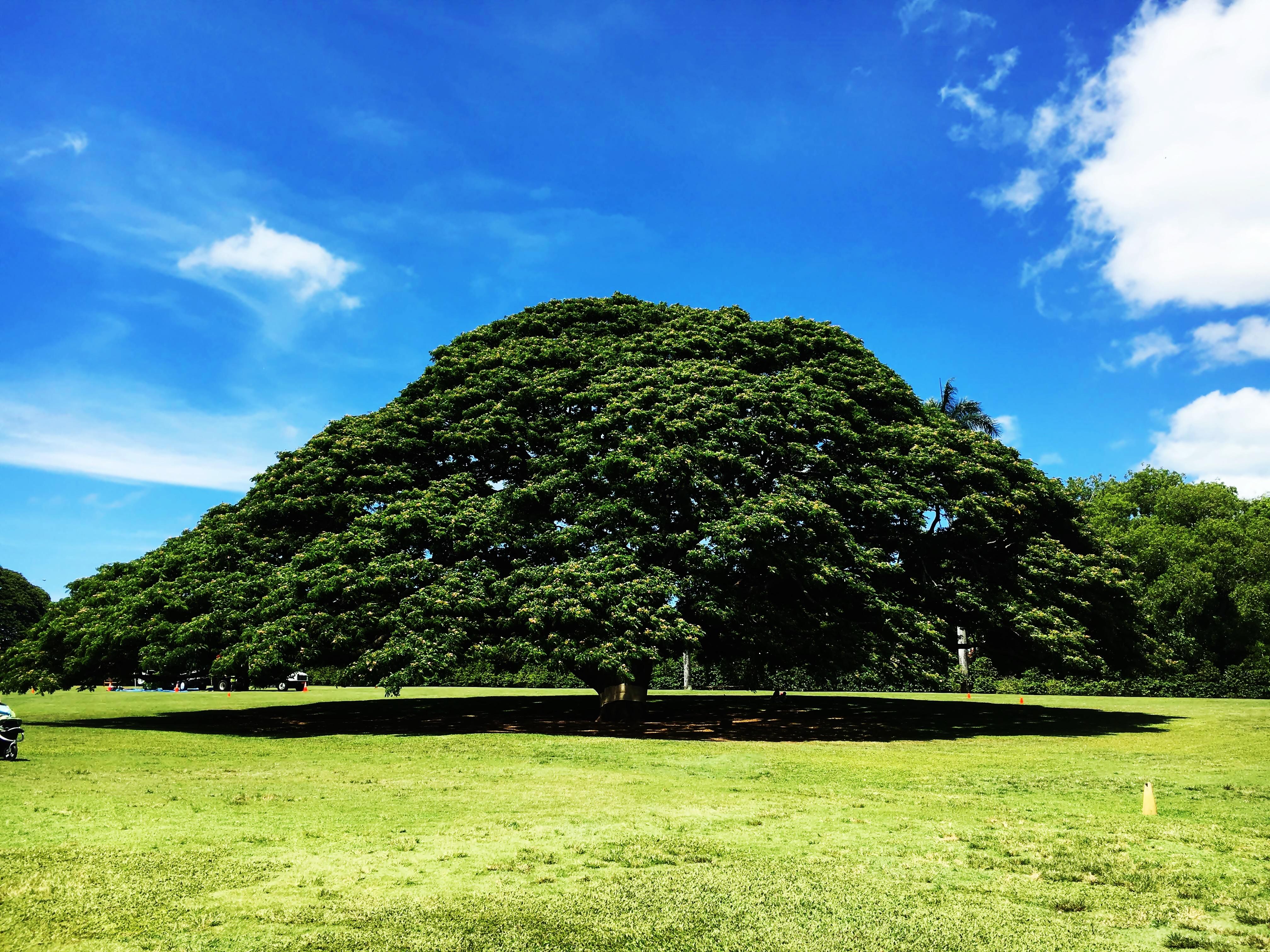その木なんの木
